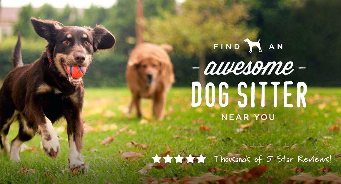 DogVacay Find a Host or Be a Host! Best dogs, Hosting