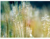 Nature Photography, aqua, yellow, blue, grasses, Blowin' in the Wind, fine art photography print 8x12