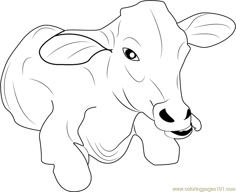 Baby Cow Coloring Page - Free Cow Coloring Pages ...   boerderij ...