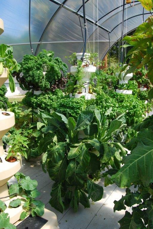 AirGrown Systems | Growing plants, Plant roots, Container ...