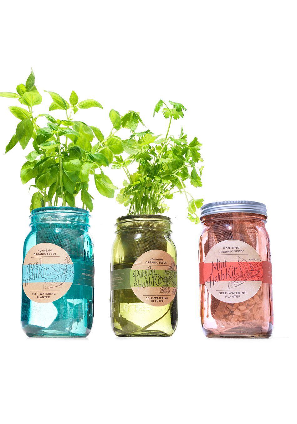 Modern Sprout Garden Jar ThreePack Herb Essentials Herbs