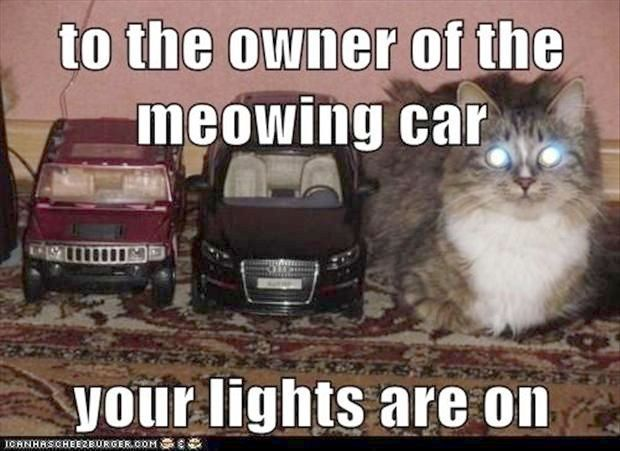 Impressive Funny Cat Pics Without Captions Great Funny Cats Funny Cat Photos Funny Animals