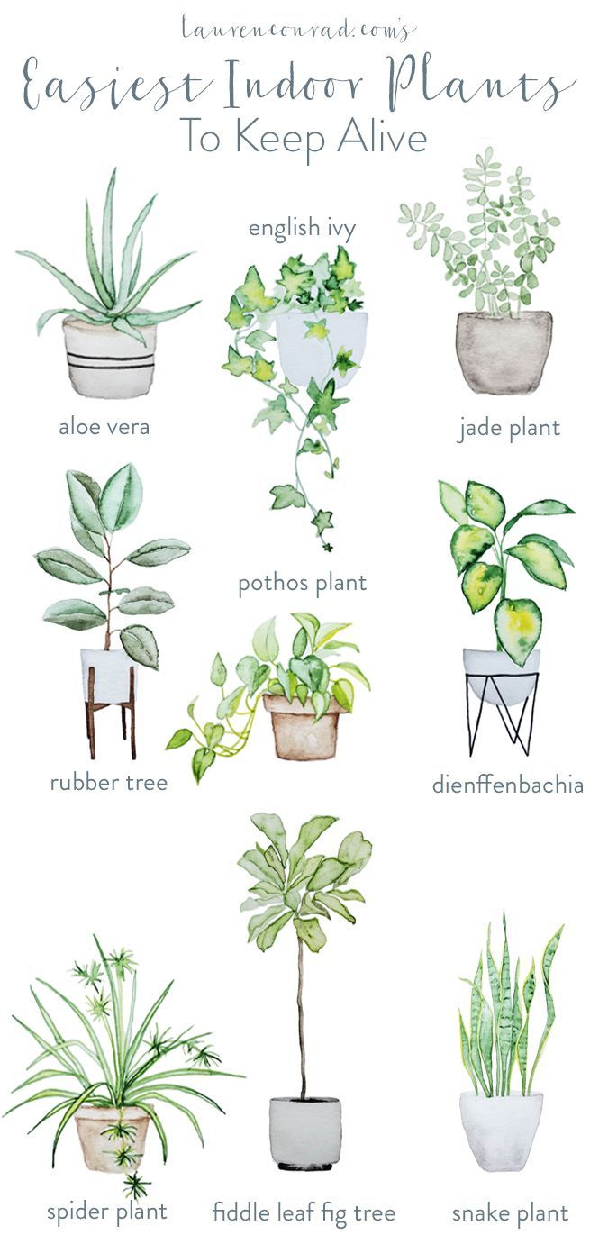 Green thumb the easiest houseplants to keep alive for Easy to maintain flowers and plants