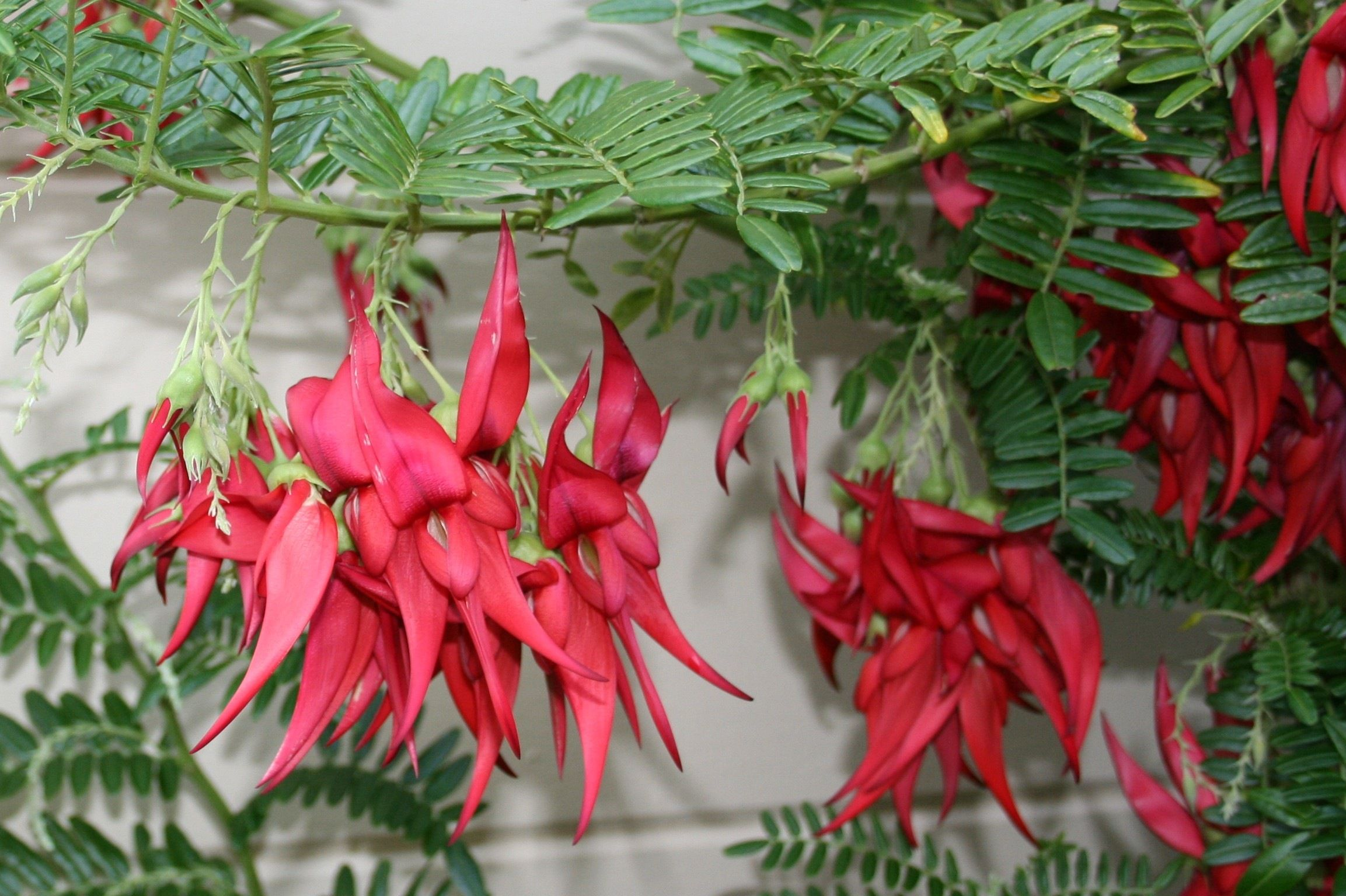 Shamelessly Tropical Hawt Plants for a Variety of