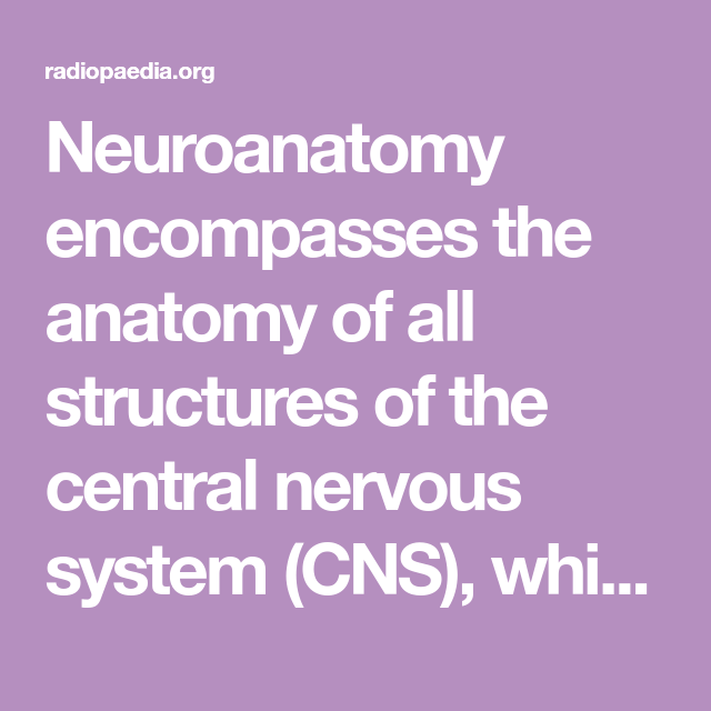 Neuroanatomy Encompasses The Anatomy Of All Structures Of The Central Nervous System Cns Which Includes The Brain And The Spinal Cord And Their Supporting S In 2021