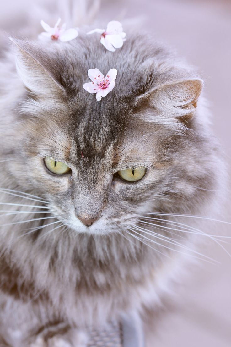 Mademoiselle Rose Things Pretty Cats Cute Cats Beautiful Cats