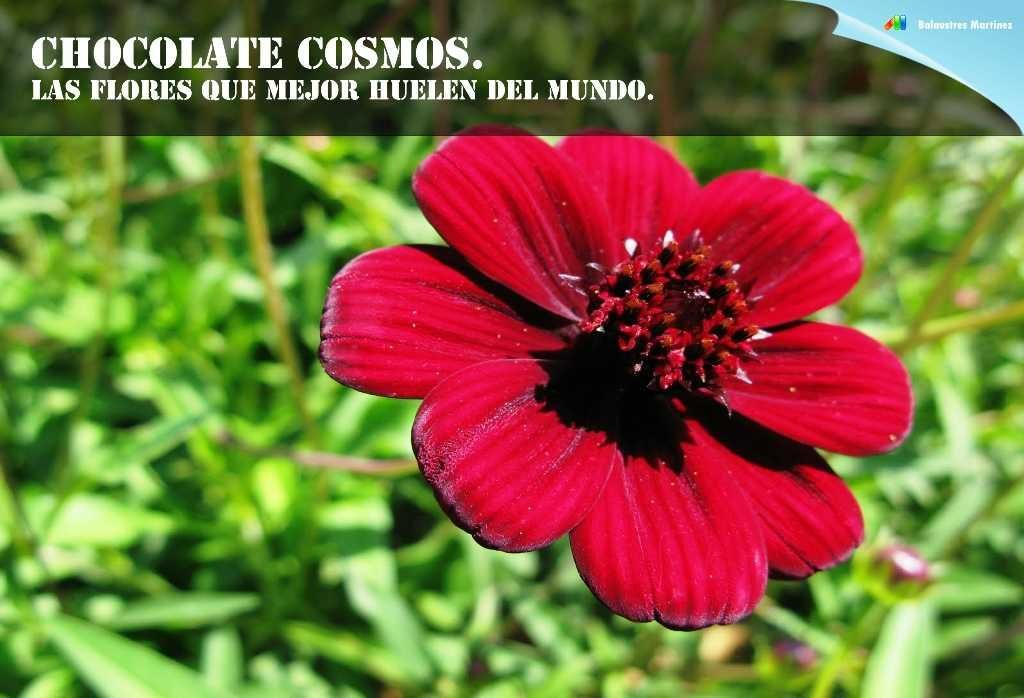¡Estas son las flores que mejor huelen del mundo! Mmmm
