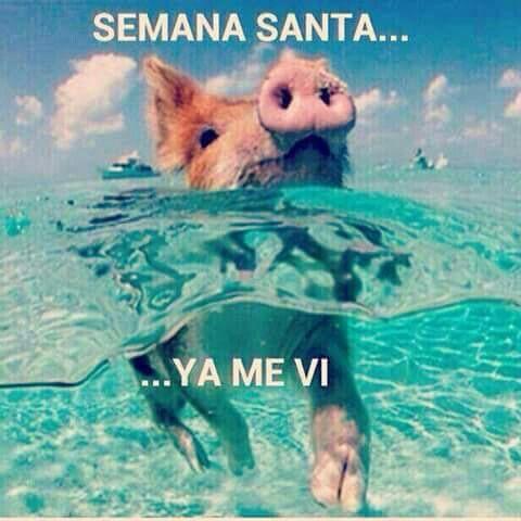 En Esta Semana Santa Ya Me Vi Jajajaja Meme Vacaciones Semana Santa Semana Santa Memes Memes De Vacaciones
