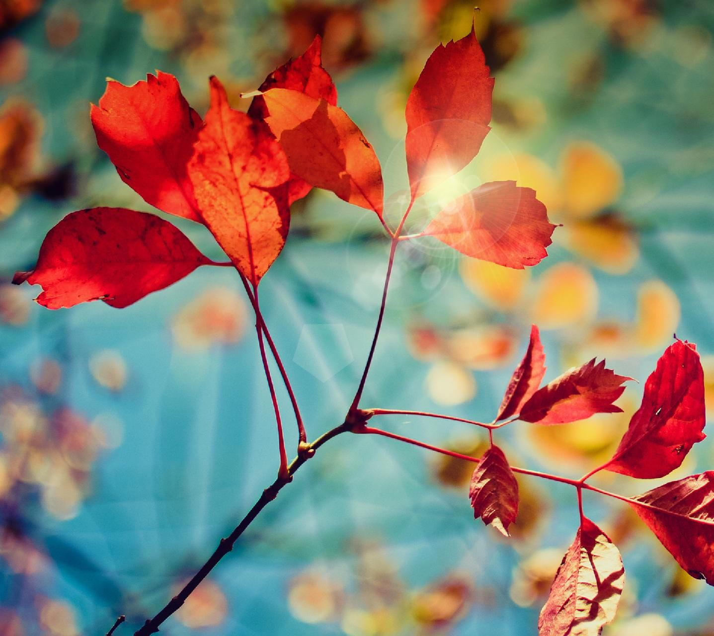 Download Samsung Galaxy S4 Wallpaper By Ong76win2 92 Free On Zedge Now Browse Millions Of Popular Samsungga Stock Wallpaper Live Wallpapers Autumn Leaves