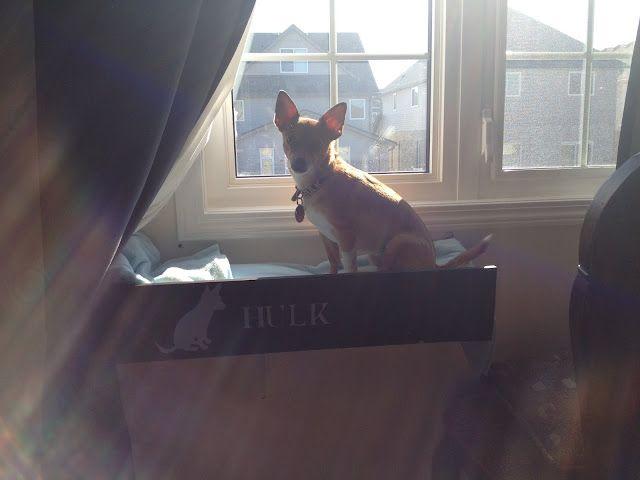 Window Shelf For Dog Dog Window Pet Furniture Window Shelves