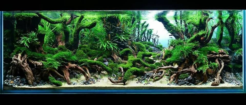 Pin by Trent R. on Aquariums and Aquascaping   Freshwater ...