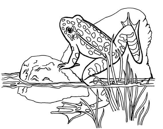 Animal coloring pages for kids Leopard frog Frogs Free