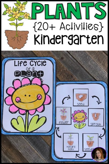 plant activities writing crafts science lessons and centers for kindergarten 20 science. Black Bedroom Furniture Sets. Home Design Ideas