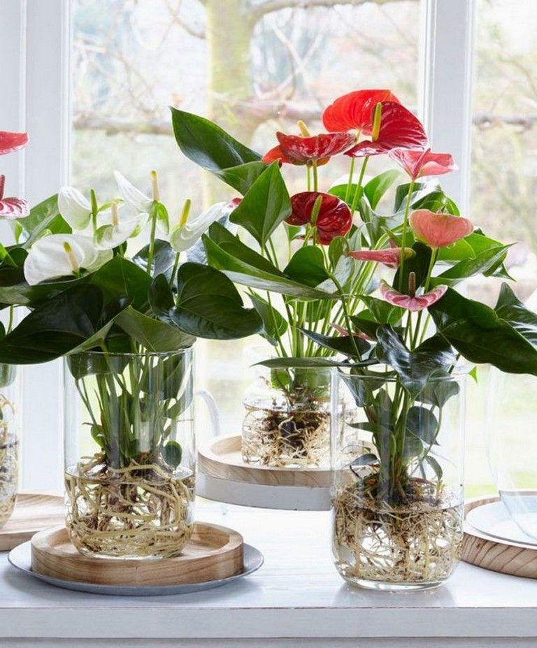 26 Cool Indoor Water Garden Ideas For Best Indoor Garden Solution Anthurium Plant Indoor Water Garden Plants