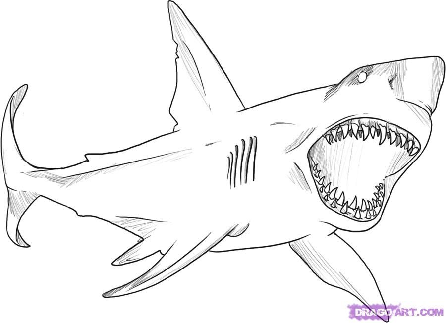 How To Draw A Great White Shark Step By Step Fish Animals Free Online Drawing Tutorial Added Shark Coloring Pages Great White Shark Drawing Shark Drawing