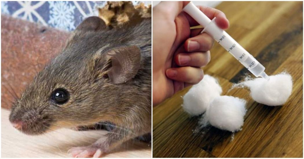 how to get rid of rats outside uk
