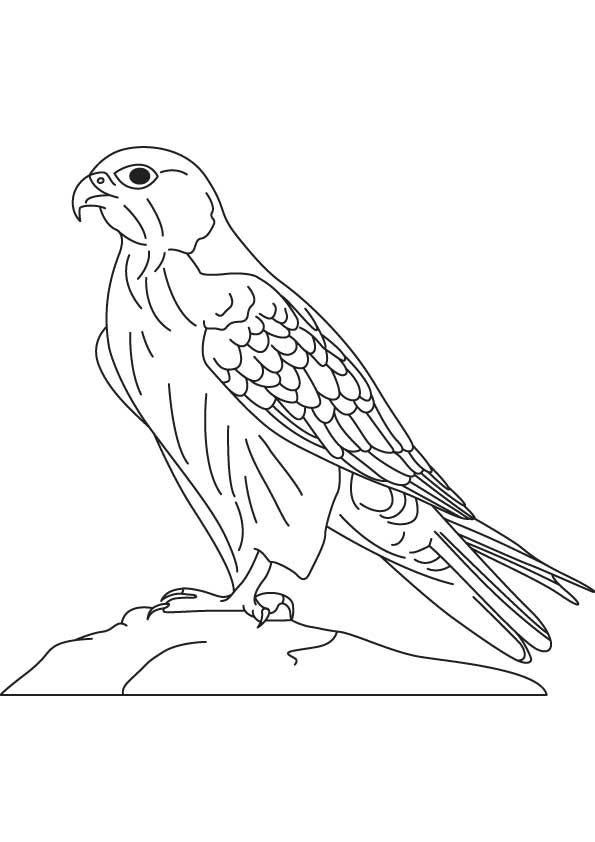 falcon coloring pages Hawk & Falcon Coloring Pages for Kids   Preschool and Kindergarten  falcon coloring pages