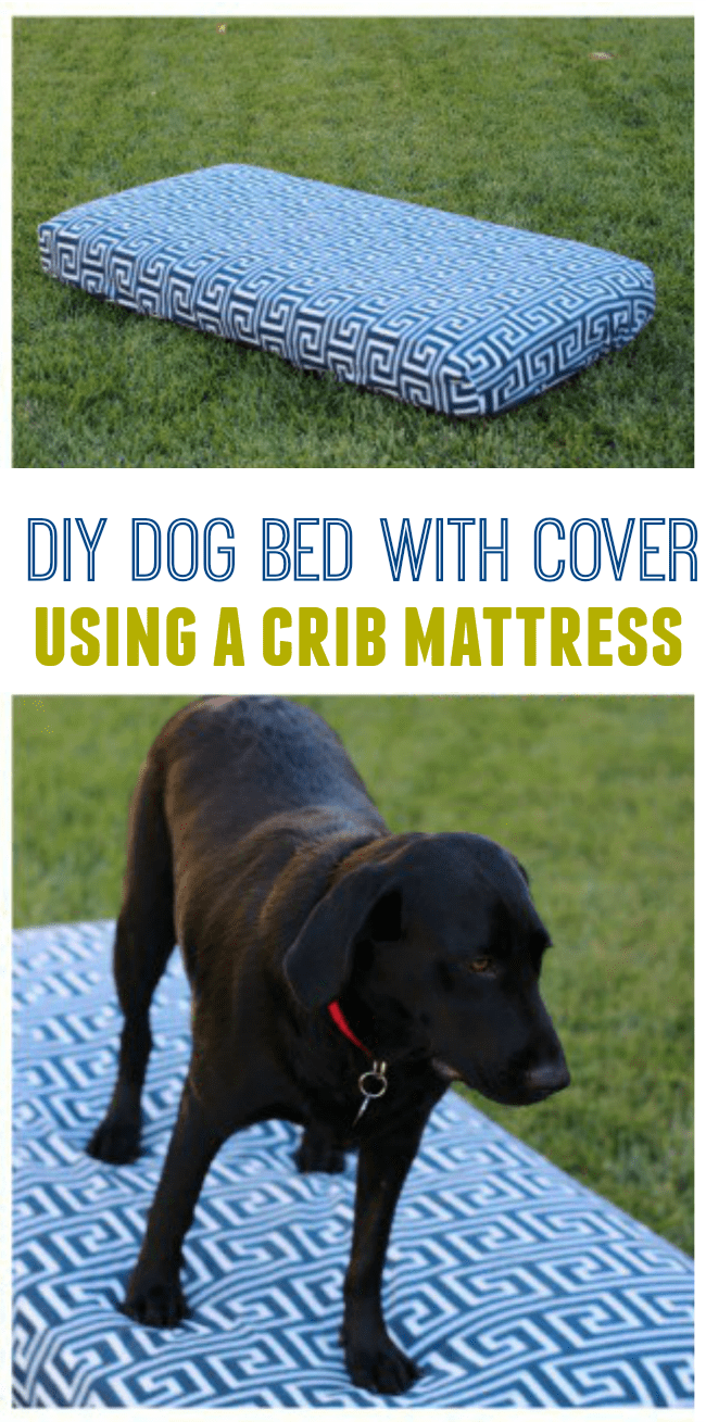 20 diy dog outdoor