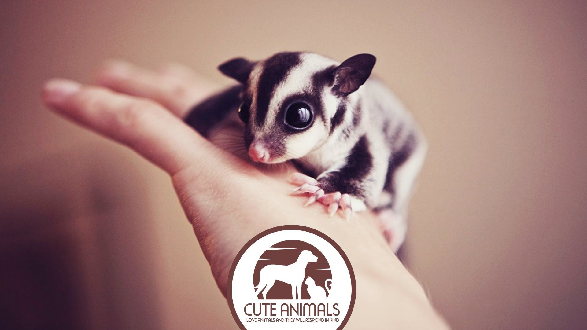 These Cute Baby Animals Will Melt Your Heart In The Animal - 28 cute baby animals will melt heart