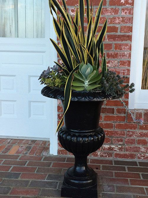 Creative Container Gardening: Trendy Succulents And Low Water Snake Plant  Add Drama To A Simple Urn.