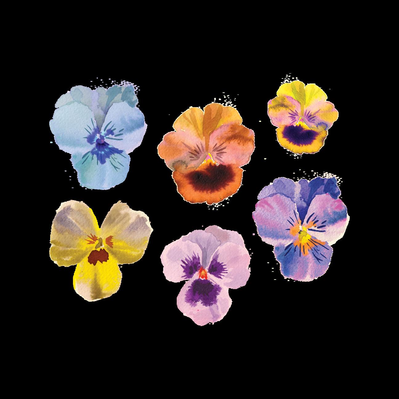 Pansies In 2020 Watercolor Tattoo Flower Pansies Flower Tattoos