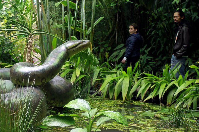 Jardín Botánico José Celestino Mutis - Buscar con Google ...