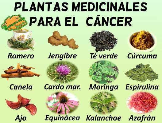 Resultado de imagen de Plantas medicinales para tratar el Cáncer
