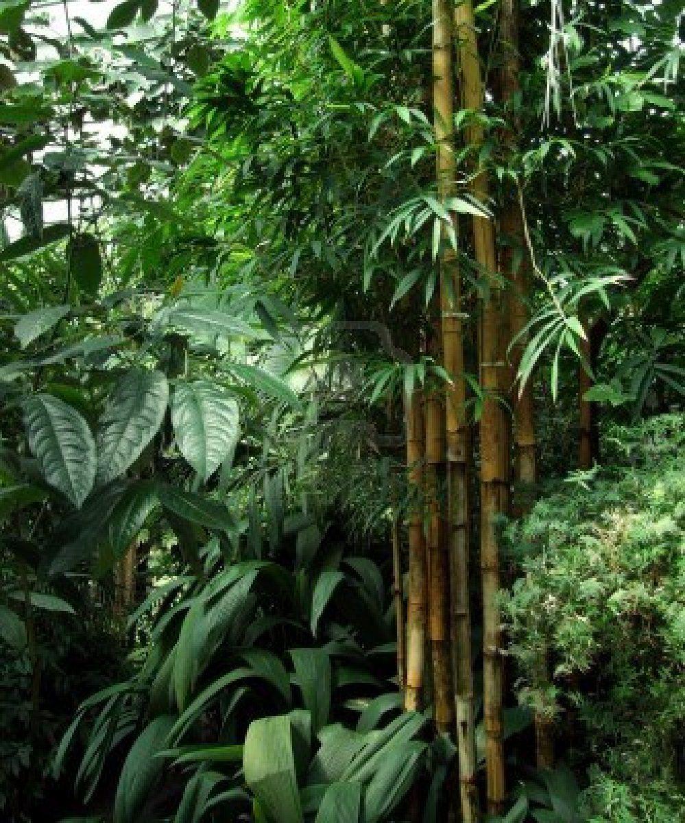 Tropical plants jard n pinterest jardines tropicales for Jardin tropical plantas