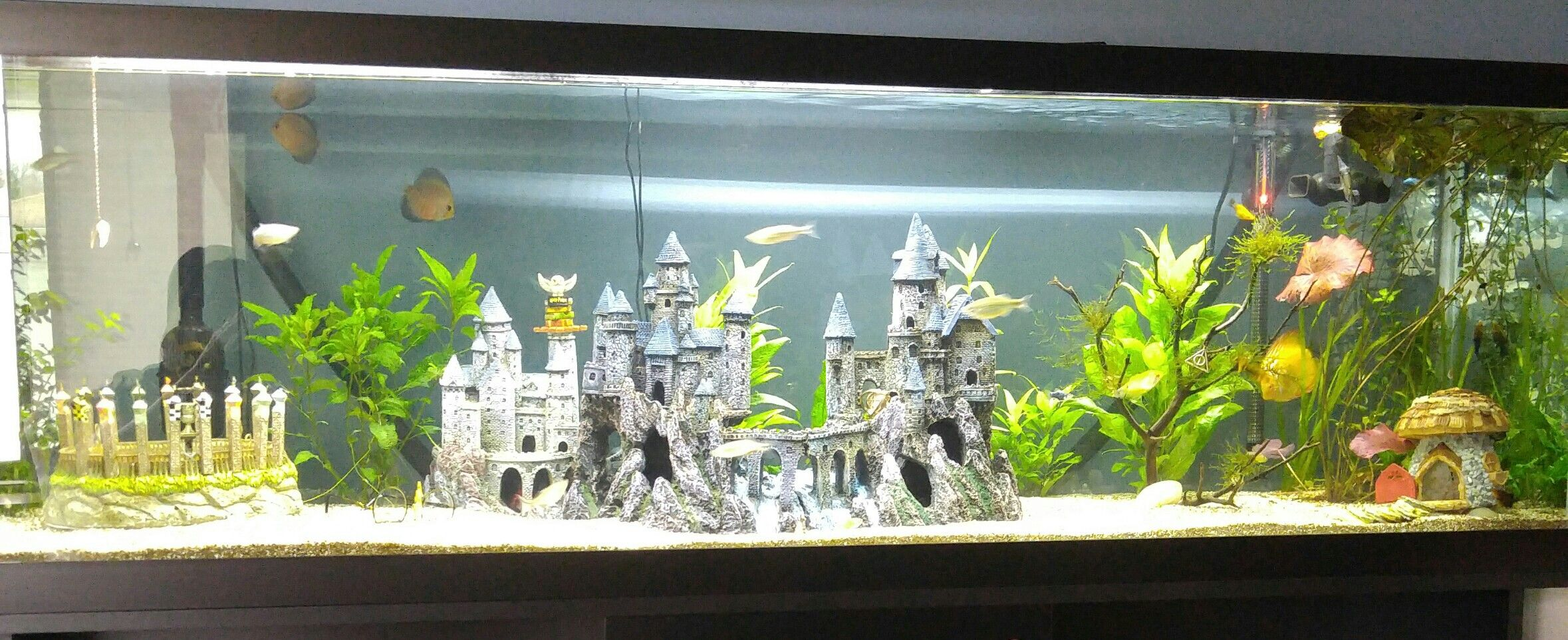 harry potter themed fish tank tropicalfishaquariumideas