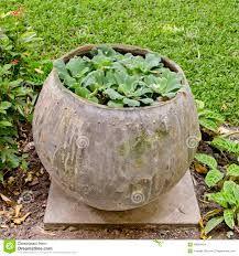 Resultado de imagem para jardim com plantas pequenas