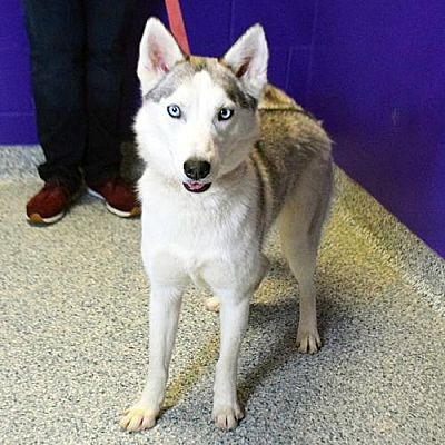Laurent Urgent Located At Dekalb County Animal Shelter In