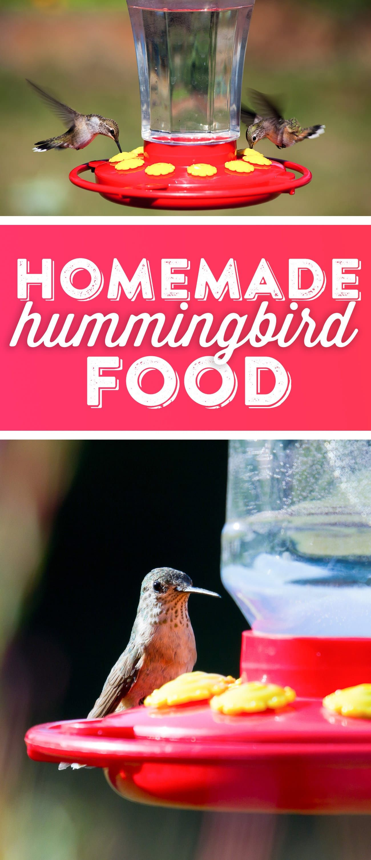 Hummingbird Food Recipe Hummingbird Food Homemade Hummingbird