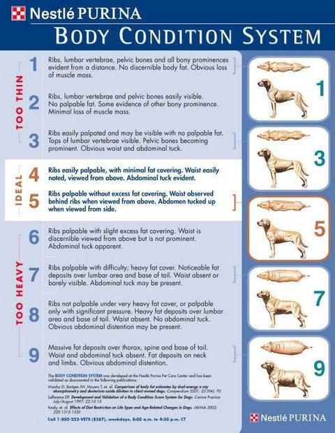 Purina Body Condition System -- how to tell if your dog is
