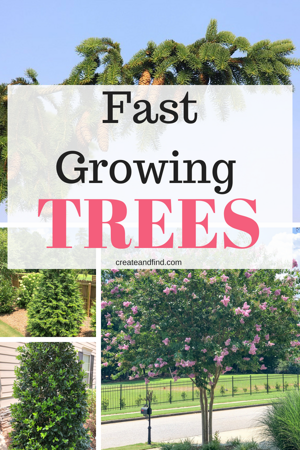 Fast Growing Privacy Trees Fast Growing Trees Privacy Plants Growing Tree