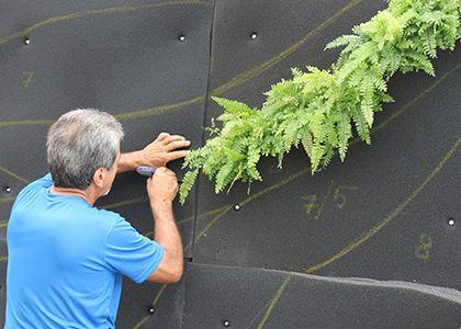 Miami Vertical Garden | Living Walls
