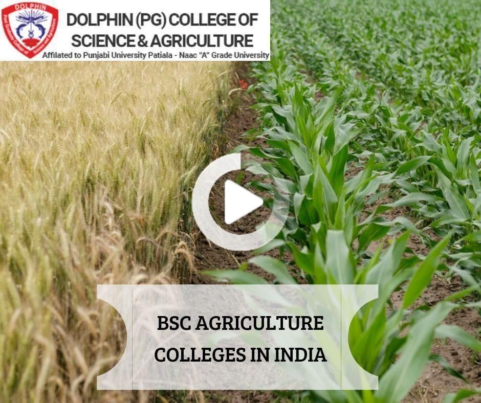 BSc Horticulture College in Chandigarh | Dolphin PG College
