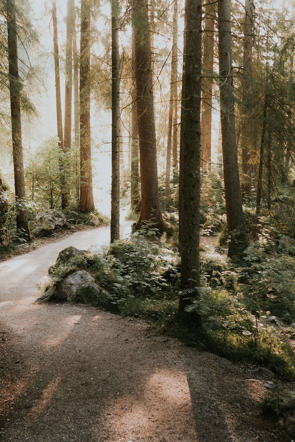 Lost In The Forest Art Print Of A Warm Forest On A Summer Morning With Golden Light Flowing Landscape Photography Art Landscape Photography Forest Landscape