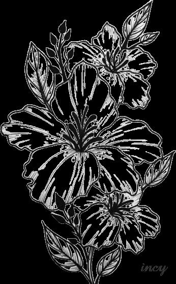 Pin By Maria Jesus On Scrapbook Pencil Drawings Of Flowers Flower Drawing Beautiful Flower Drawings