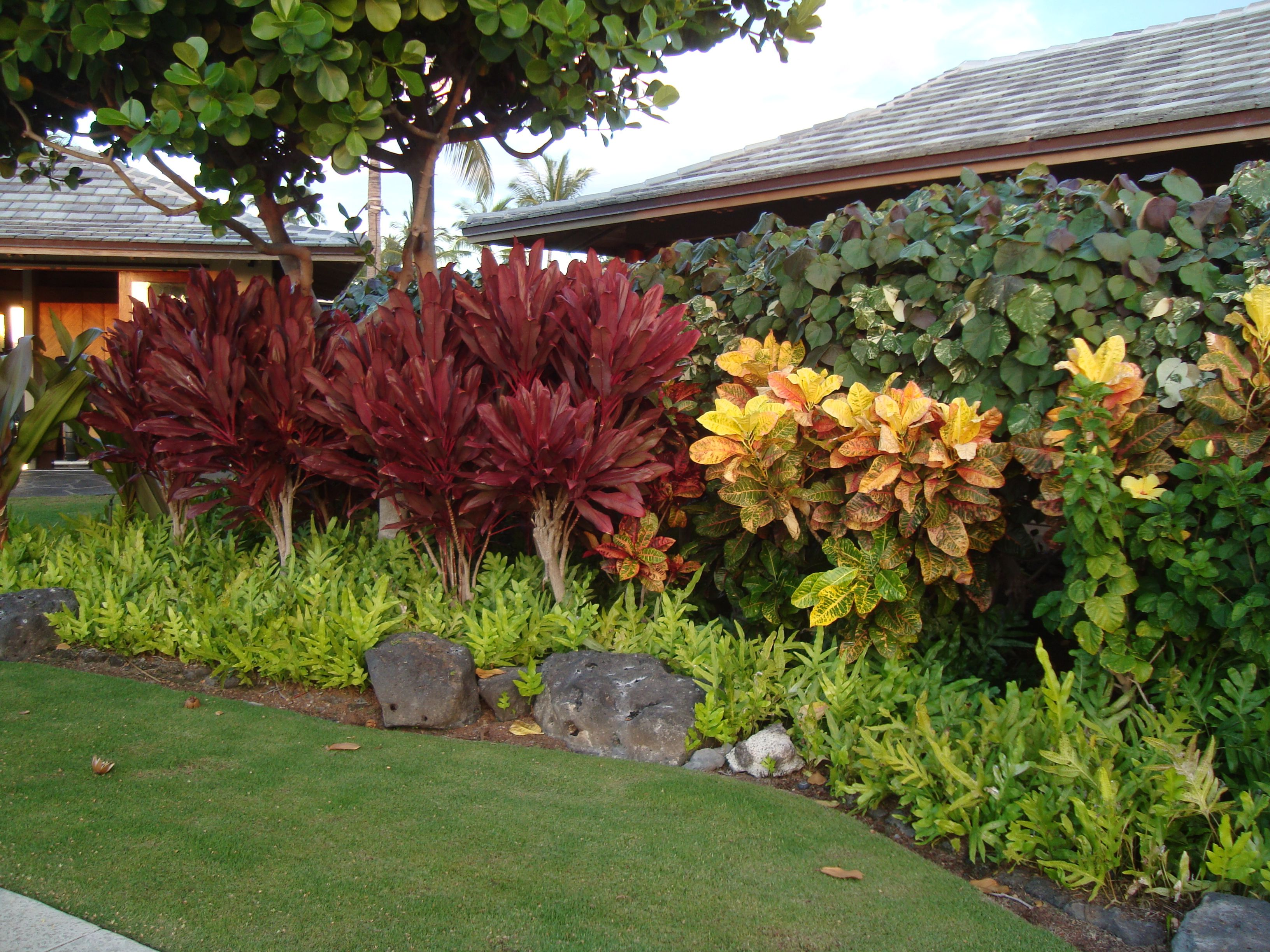 Tropicals on the Big Island of Hawaii - crotons, red ti ...