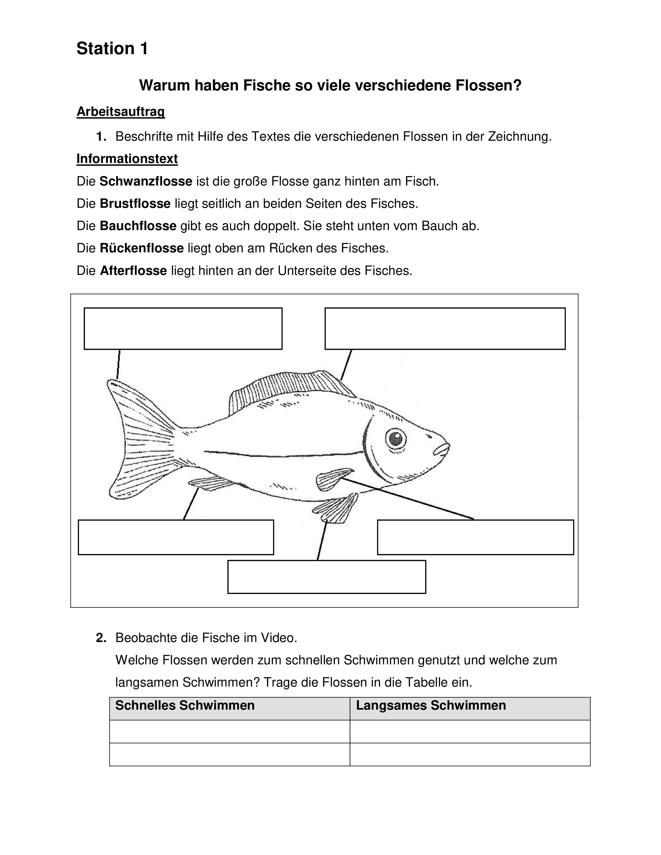 Stationsarbeit Fisch Klasse 20 – Unterrichtsmaterial im Fach ...
