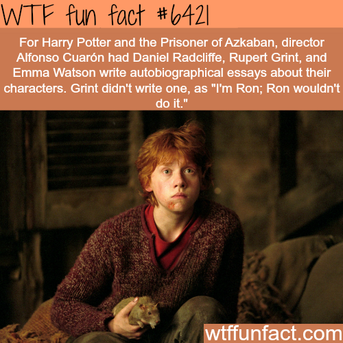 Harry Potter And The Prisoner Wtf Fun Facts Visit Http Gwyl Io For More Diy Kids Pets Videos Harry Potter Fun Facts Wtf Fun Facts Harry Potter Jokes