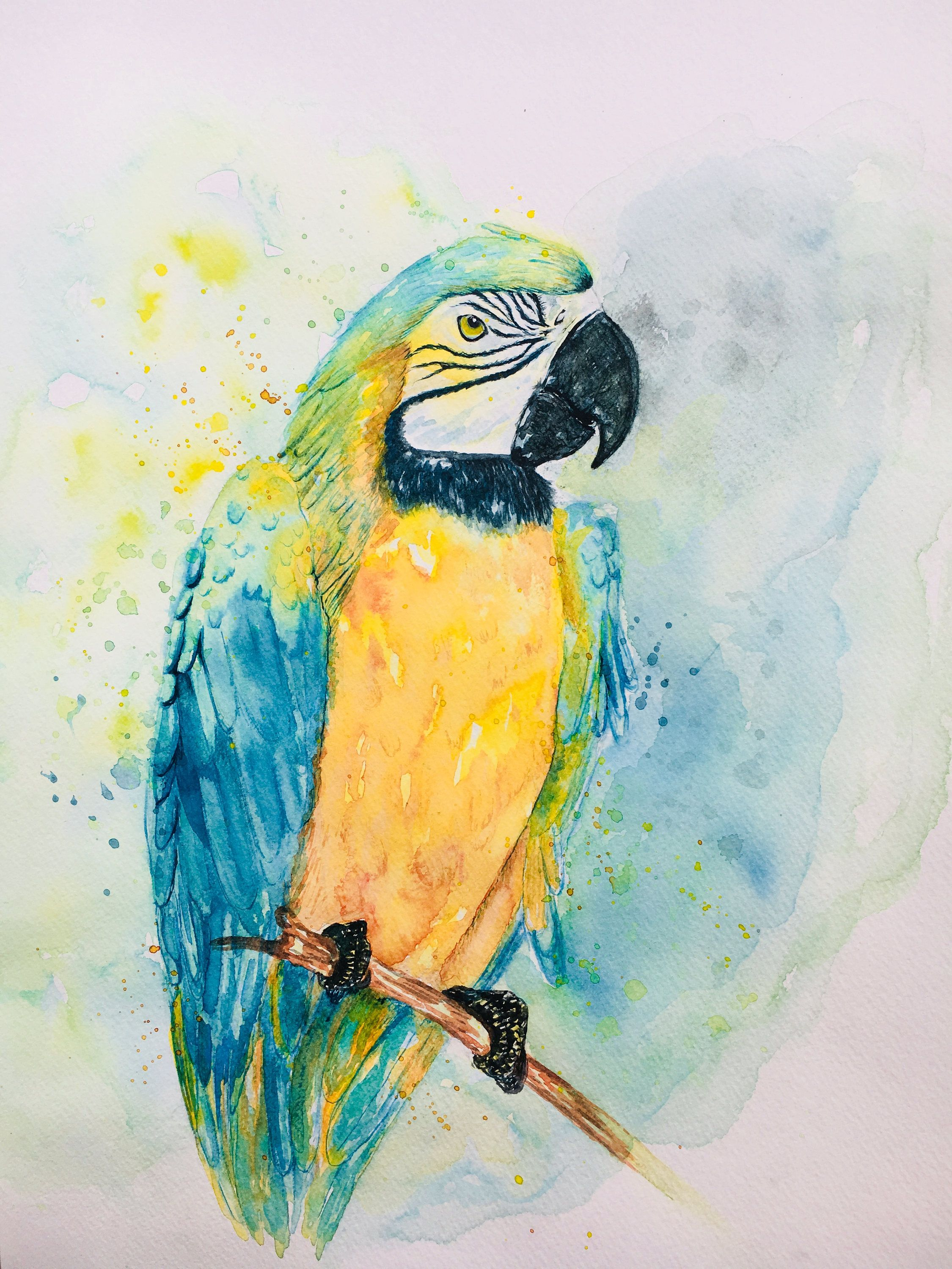 Parrot Art Blue And Yellow Watercolor Splash Design Dessin Perroquet