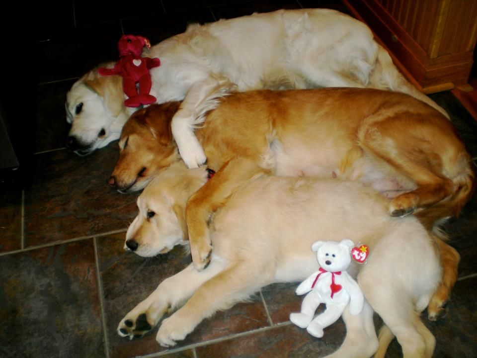 Isaiah Comfort Dog in a group hug! dogs