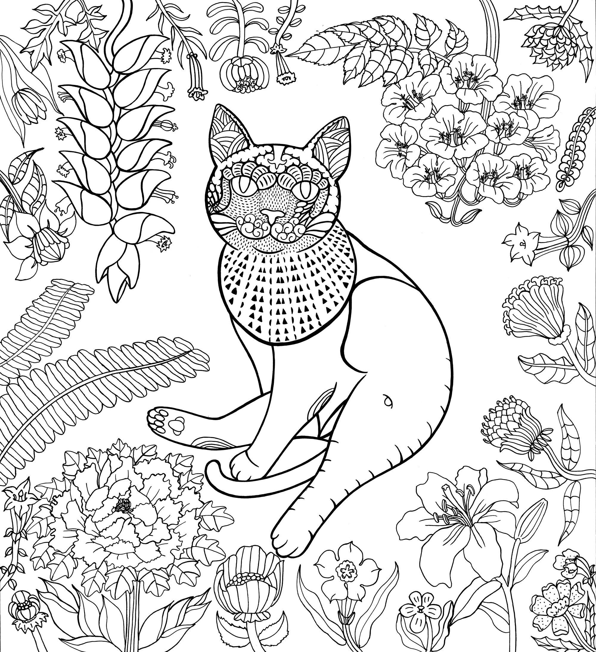 Pin by nuvia baez on carteles pinterest cat