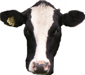 Cow Head Png Image With Transparent Background Png Free Png Images Cow Head Image Cow