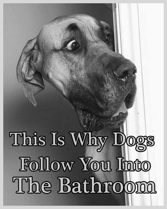 This Is Why Dogs Follow You Into The Bathroom I Never Knew This In 2020 Funny Animal Pictures Dogs Cute Dogs