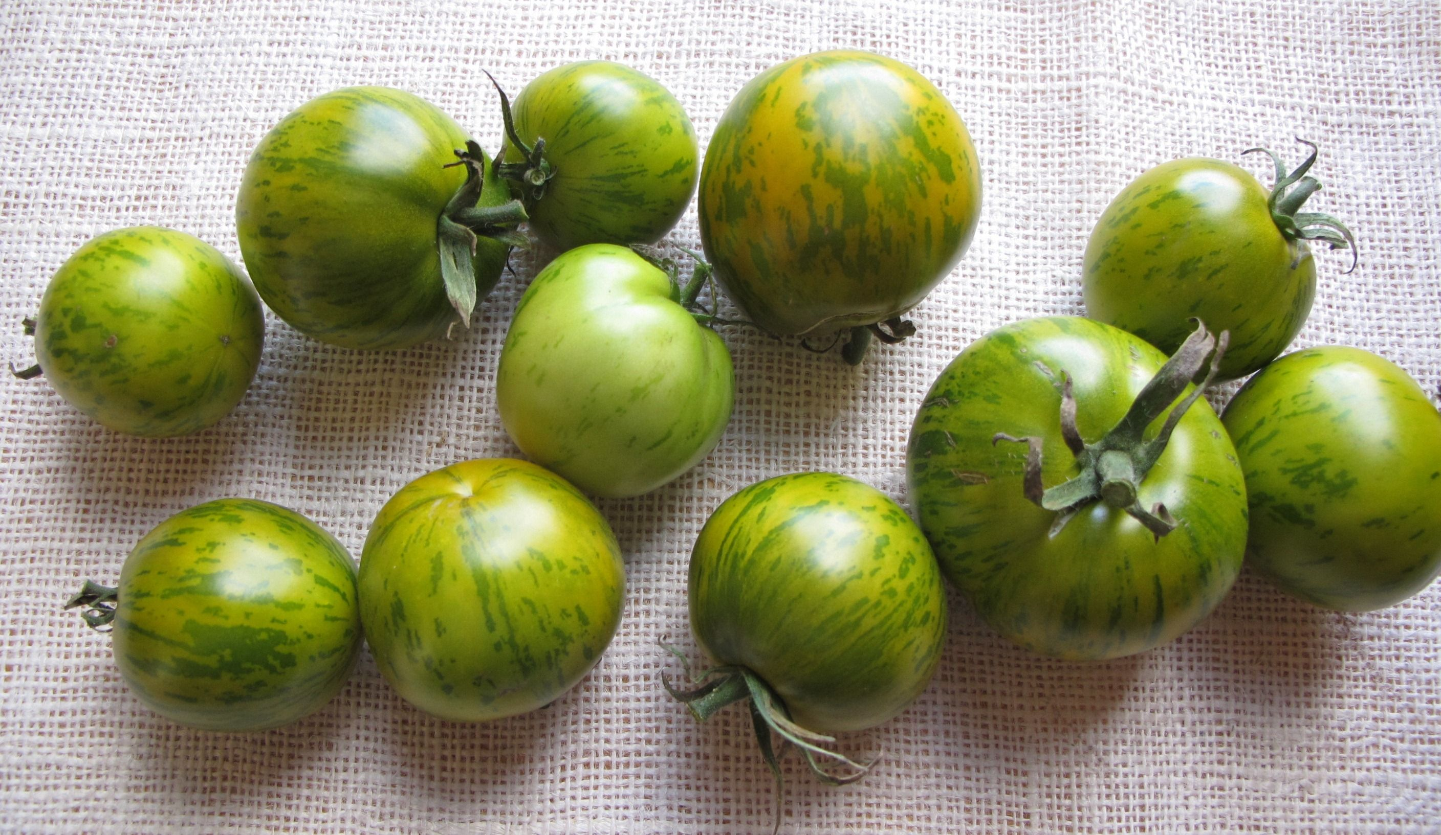 People Are Often Unaware That Heirloom Tomatoes Can Be Red 400 x 300