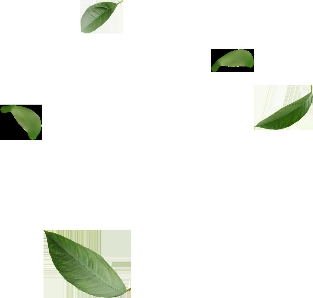 Image Title Matcha Green Tea Green Tea Matcha