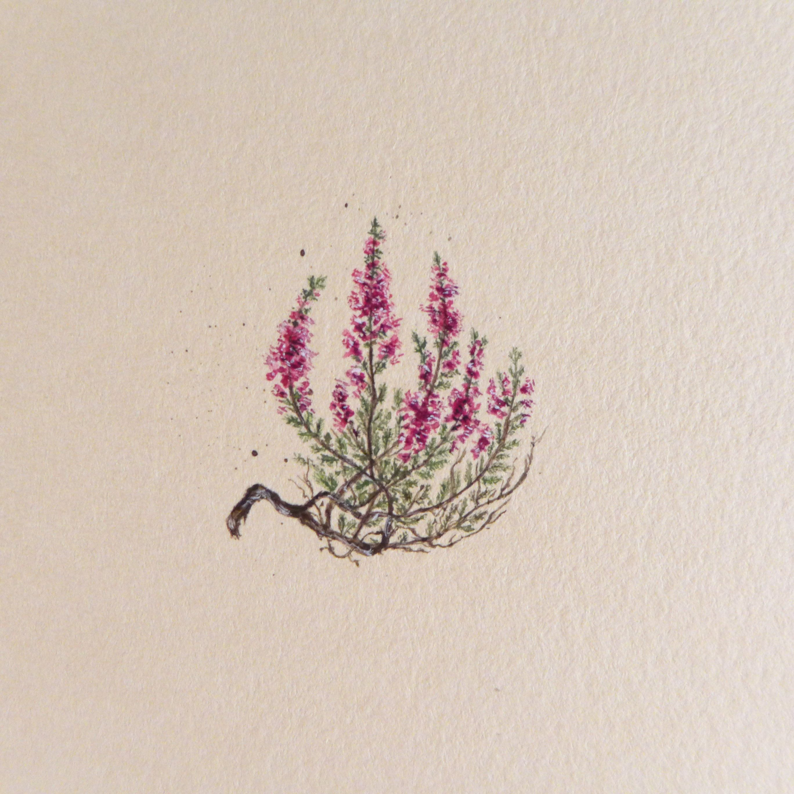 Vintage Heathers Botanical Illustration Miniature Make To Order Watercolor Gif Hand Painted Drawing Mini Painting Miniature Painting Botanical Illustration Heather Flower Miniature Painting