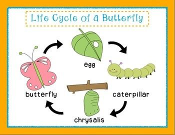 butterfly life cycle for preschool pre k kindergarten cycle of a butterfly ones room 723